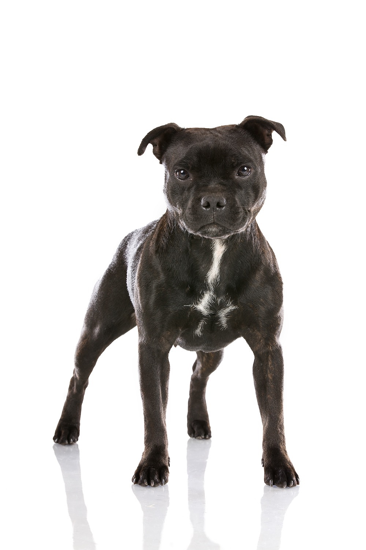 hund-hundefotograf-hundefotografering-fotograf-hodnedesign-pål-hodne 3 (1).jpg