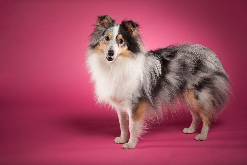 hund-hundefotograf-hundefotografering-fotograf-hodnedesign-pål-hodne--10.jpg