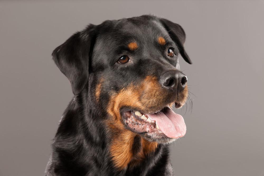 hund-hundefotograf-hundefotografering-fotograf-hodnedesign-pål-hodne--8.jpg