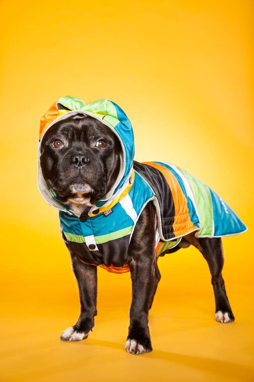 hund-hundefotograf-hundefotografering-fotograf-hodnedesign-pål-hodne--7.jpg