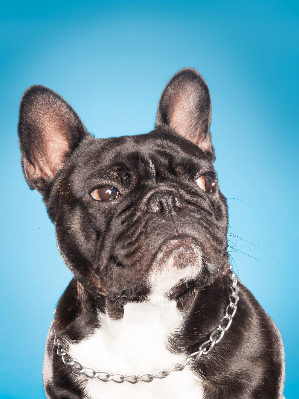 hund-hundefotograf-hundefotografering-fotograf-hodnedesign-pål-hodne-2.jpg