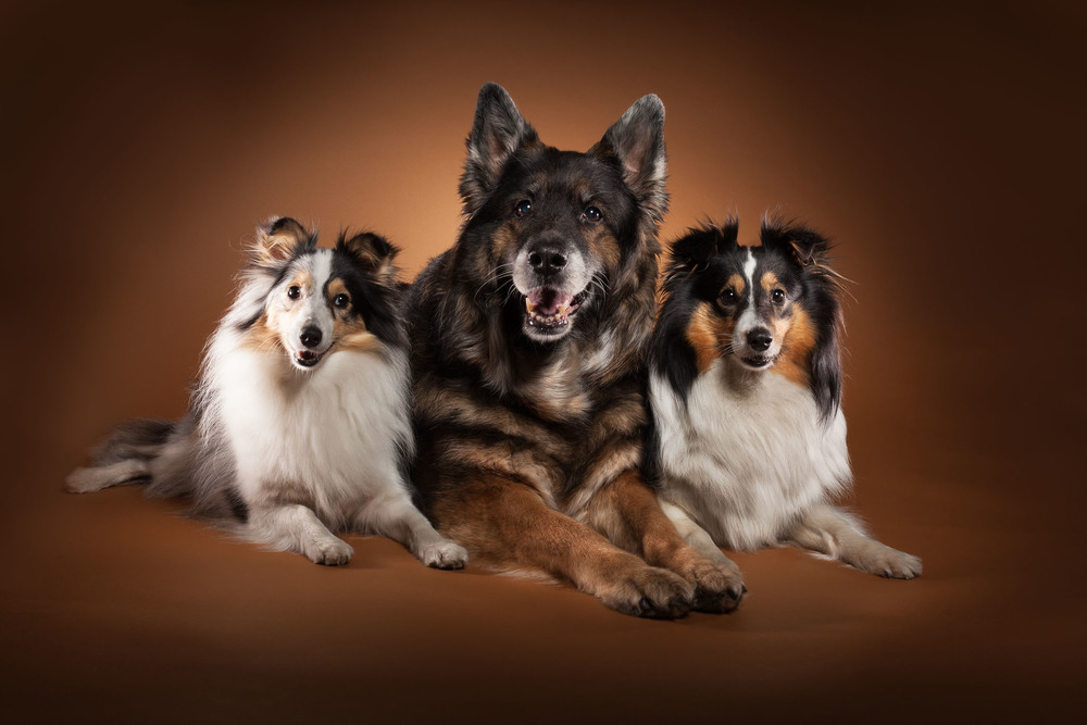 hund-hundefotograf-hundefotografering-fotograf-hodnedesign-pål-hodne--5.jpg