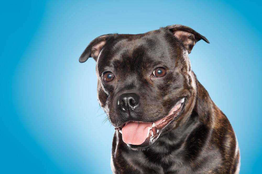 hund-hundefotograf-hundefotografering-fotograf-hodnedesign-pål-hodne--6.jpg