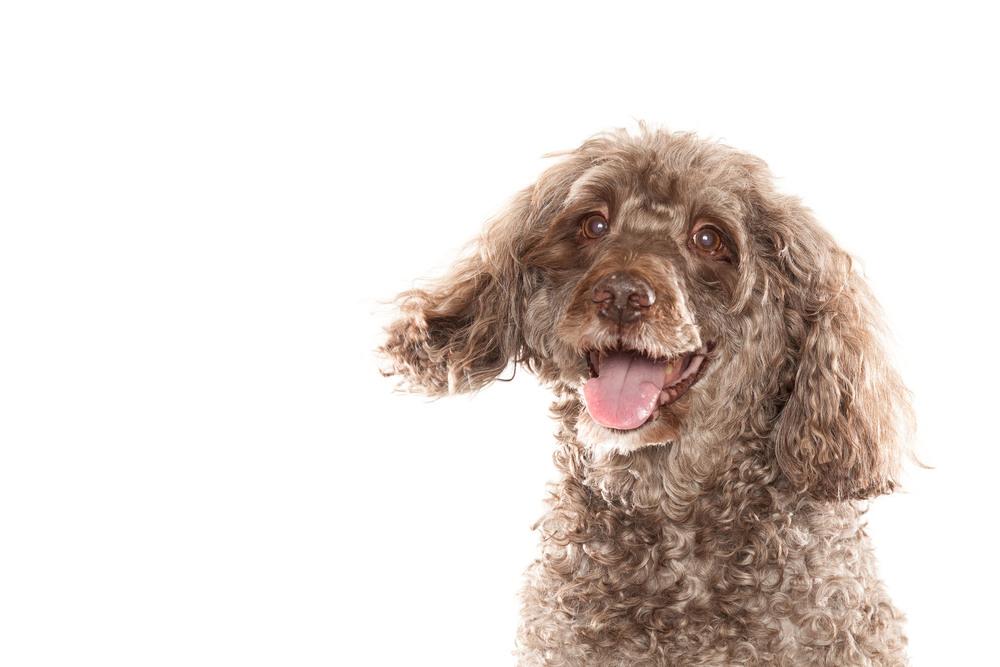 hund-hundefotograf-hundefotografering-fotograf-hodnedesign-pål-hodne-7547.jpg