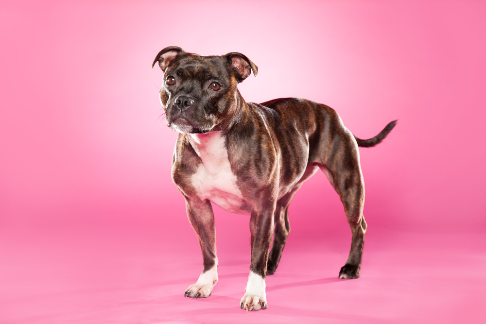 hund-hundefotograf-hundefotografering-fotograf-hodnedesign-pål-hodne-.jpg