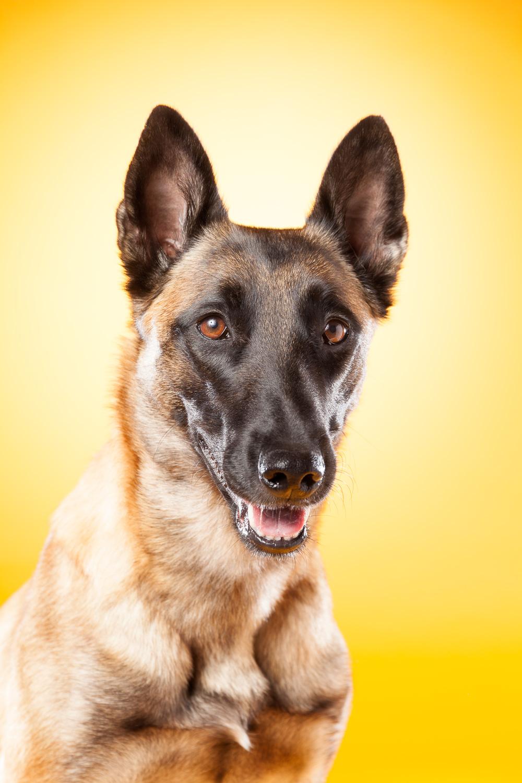 hund-hundefotograf-hundefotografering-fotograf-hodnedesign-pål-hodne--43.jpg