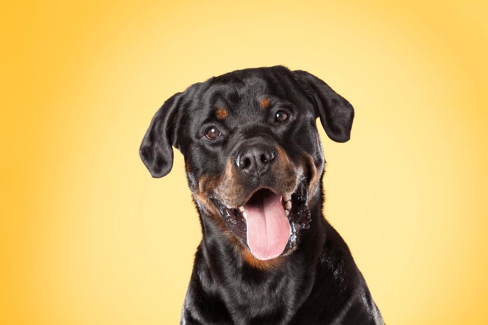 hund-hundefotograf-hundefotografering-fotograf-hodnedesign-pål-hodne--41.jpg