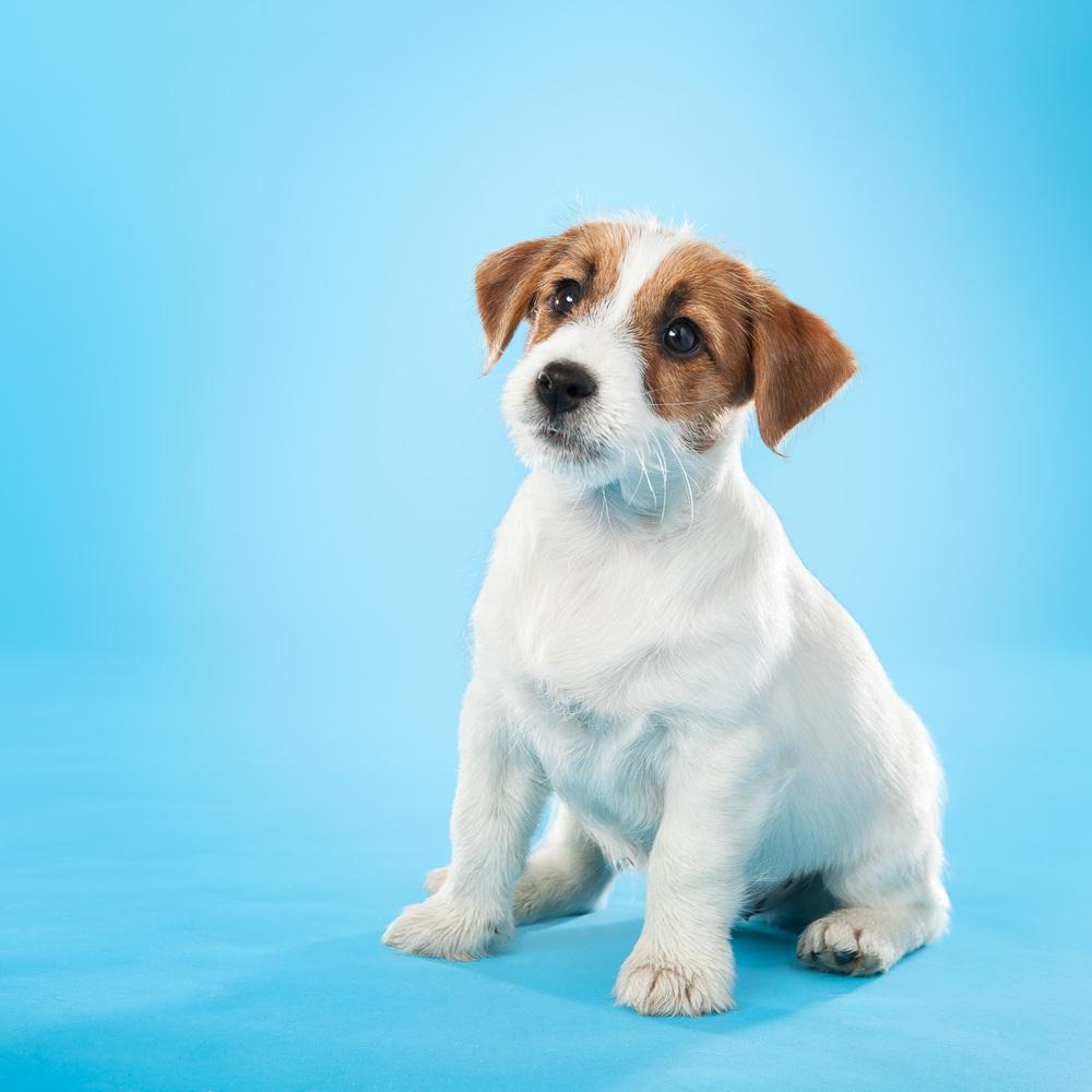 hund-hundefotograf-hundefotografering-fotograf-hodnedesign-pål-hodne--45.jpg