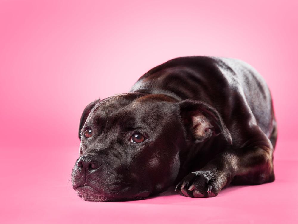 hund-hundefotograf-hundefotografering-fotograf-hodnedesign-pål-hodne--47.jpg