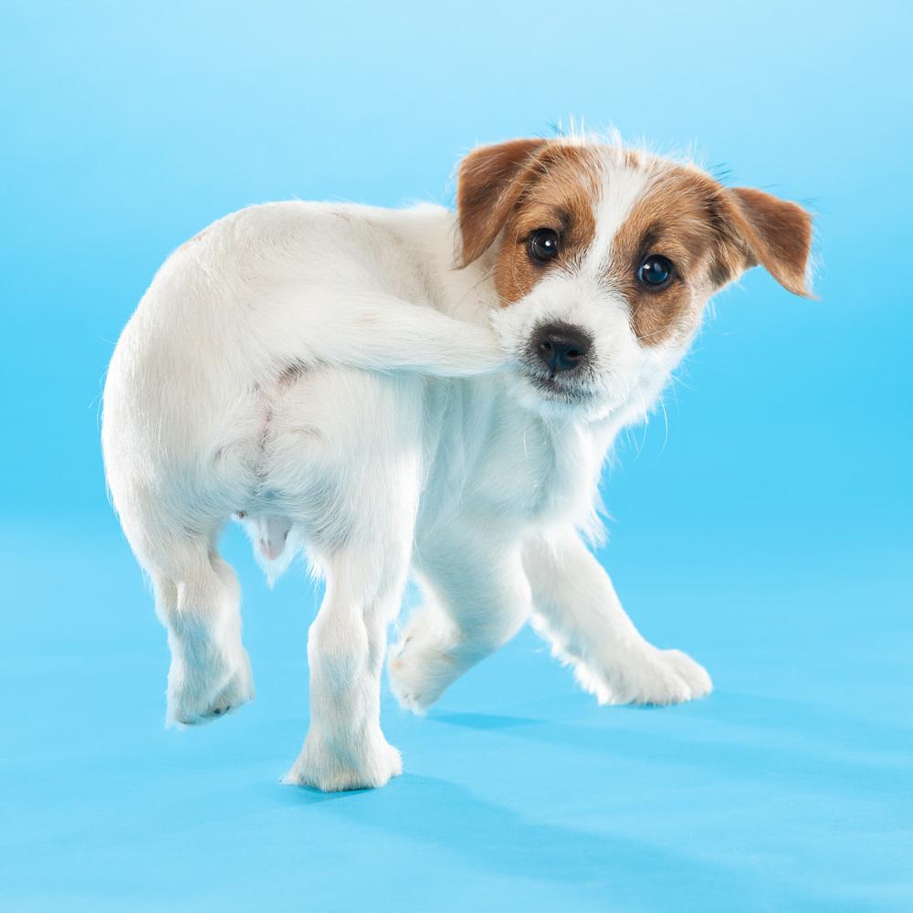 hund-hundefotograf-hundefotografering-fotograf-hodnedesign-pål-hodne--46.jpg