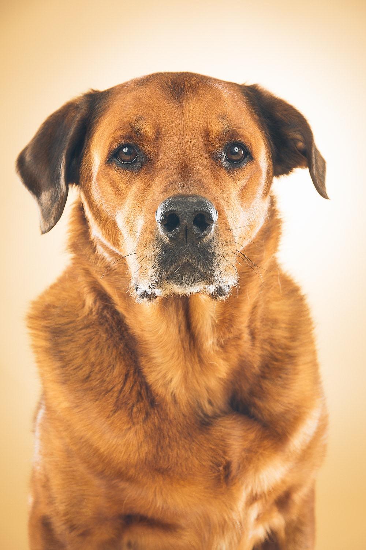 hund-hundefotograf-hundefotografering-fotograf-hodnedesign-pål-hodne--2.jpg