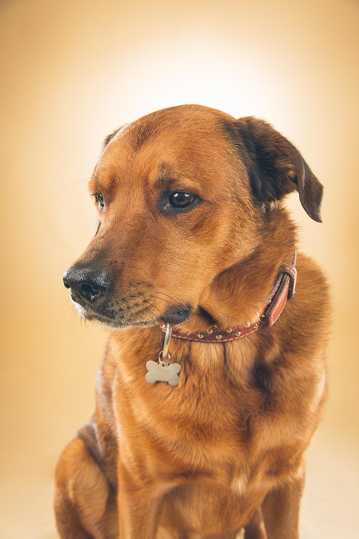 hund-hundefotograf-hundefotografering-fotograf-hodnedesign-pål-hodne--4.jpg
