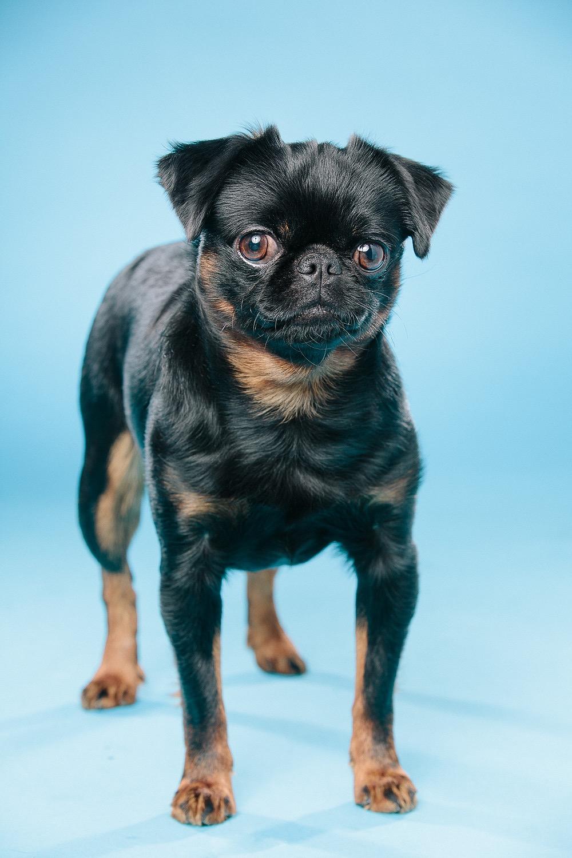 hund-hundefotograf-hundefotografering-fotograf-hodnedesign-pål-hodne-2-3.jpg
