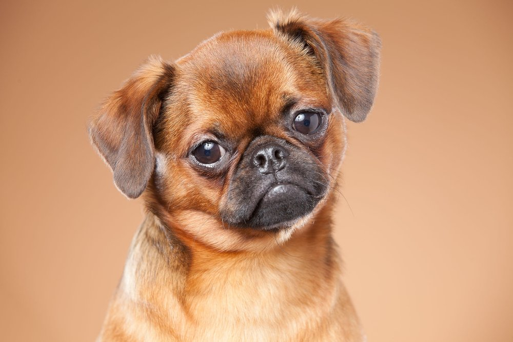 hund-hundefotograf-hundefotografering-fotograf-hodnedesign-pål-hodne--63.jpg