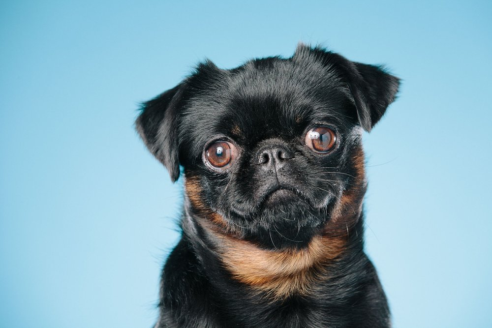 hund-hundefotograf-hundefotografering-fotograf-hodnedesign-pål-hodne--62.jpg