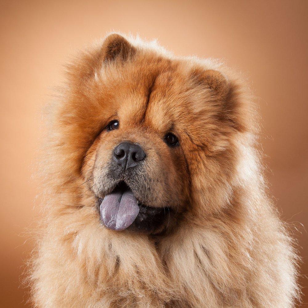 hund-hundefotograf-hundefotografering-fotograf-hodnedesign-pål-hodne--65.jpg