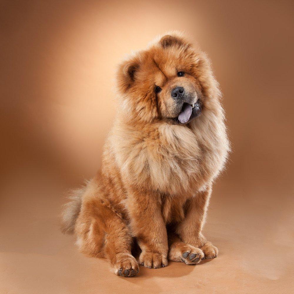 hund-hundefotograf-hundefotografering-fotograf-hodnedesign-pål-hodne--66.jpg