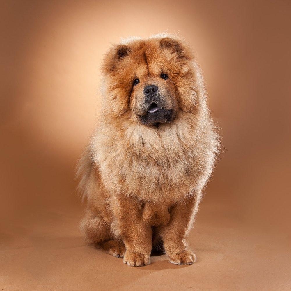 hund-hundefotograf-hundefotografering-fotograf-hodnedesign-pål-hodne--64.jpg