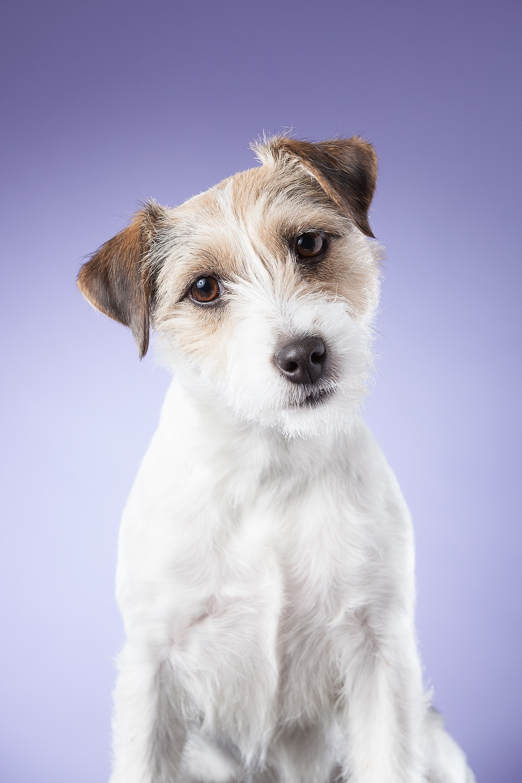 hund-hundefotograf-hundefotografering-fotograf-hodnedesign-pål-hodne--67.jpg