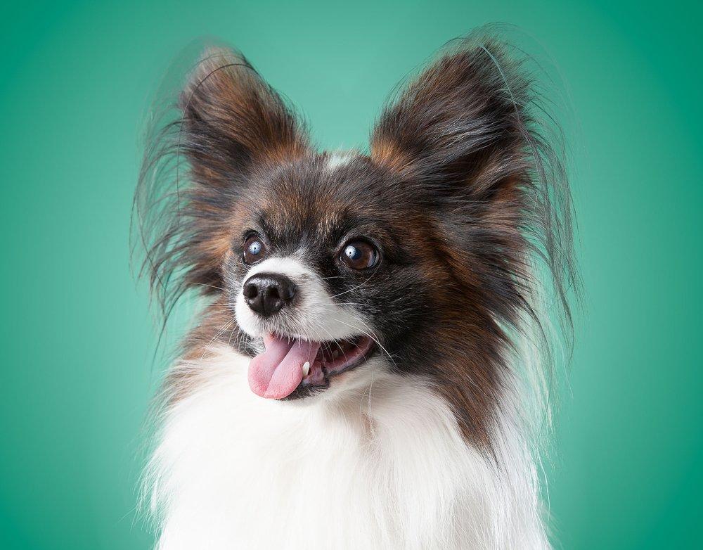 hund-hundefotograf-hundefotografering-fotograf-hodnedesign-pål-hodne--68.jpg