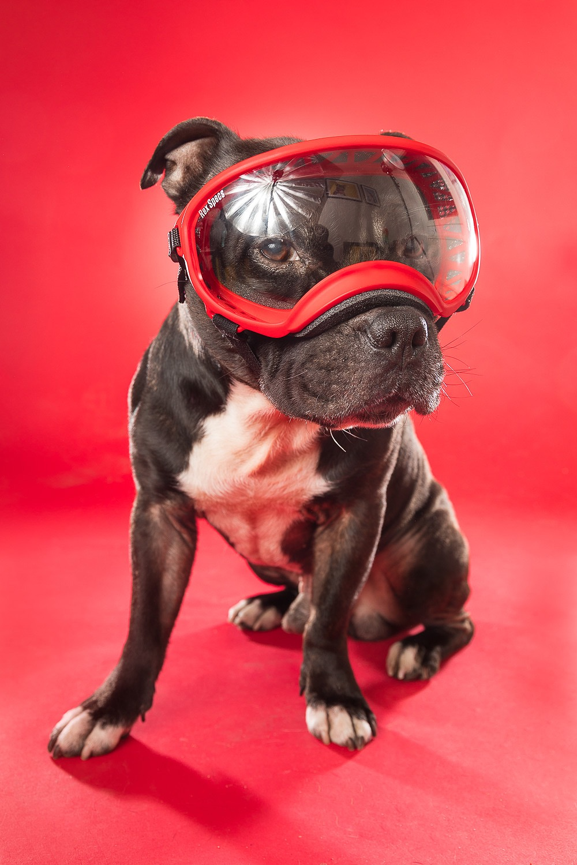 hund-hundefotograf-hundefotografering-fotograf-hodnedesign-pål-hodne--80.jpg