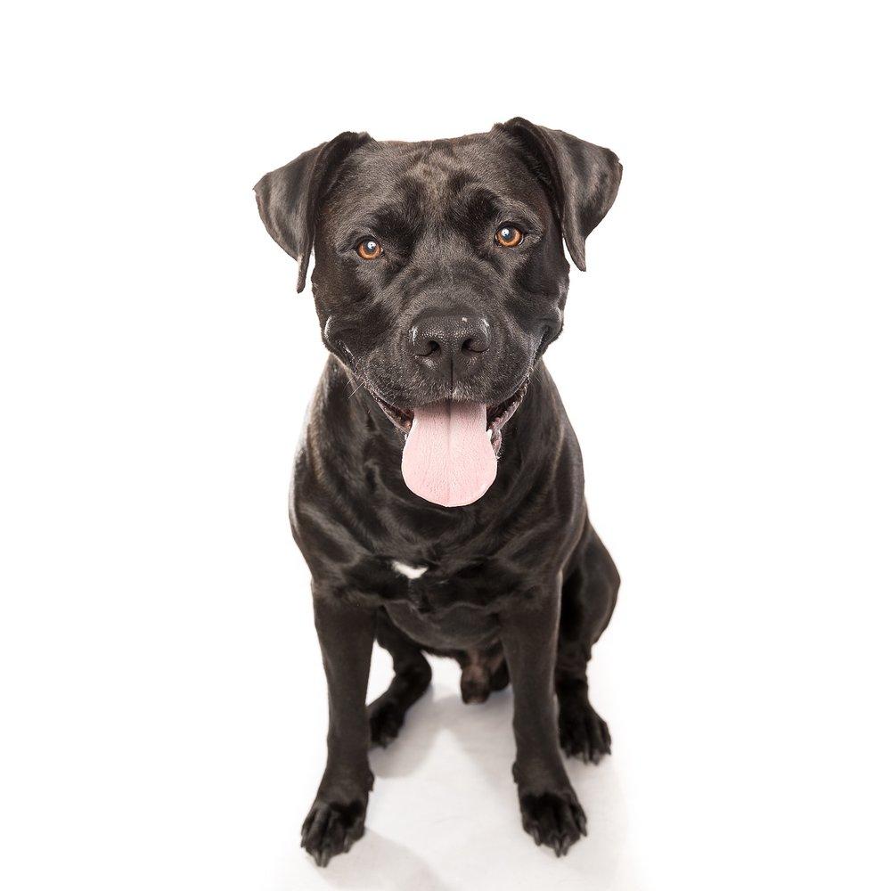 hund-hundefotograf-hundefotografering-fotograf-studiohodne-hodne--2-kopi.jpg