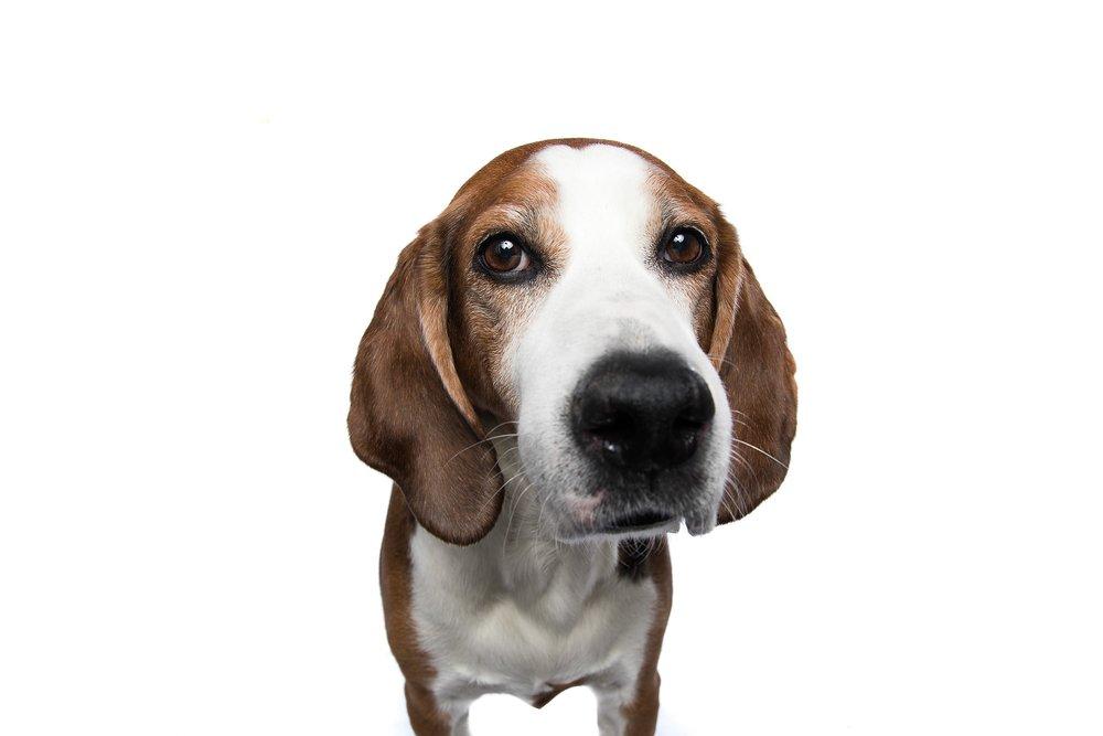 hund-hundefotograf-hundefotografering-fotograf-studiohodne-hodne--2.jpg