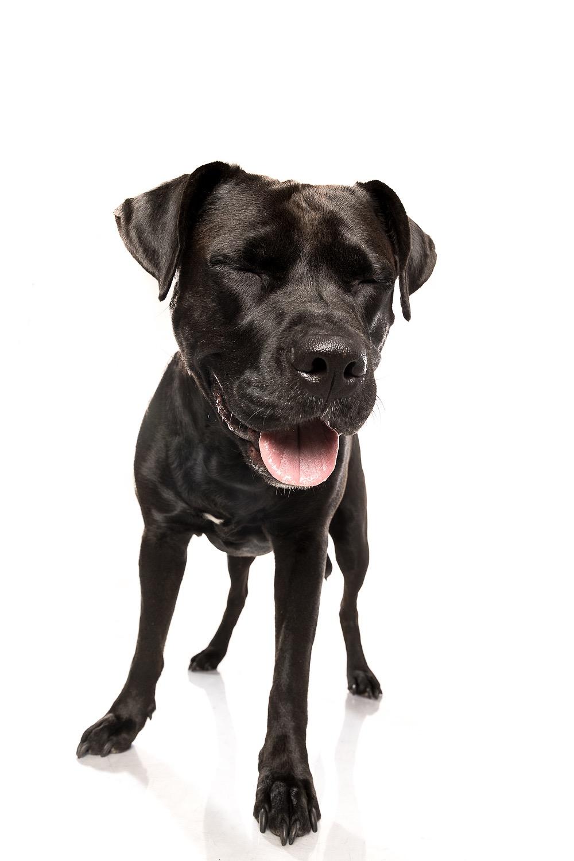 hund-hundefotograf-hundefotografering-fotograf-studiohodne-hodne--3-kopi.jpg
