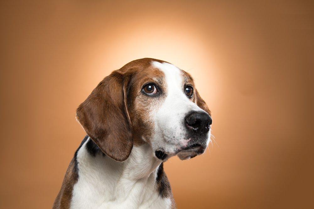 hund-hundefotograf-hundefotografering-fotograf-studiohodne-hodne--3.jpg