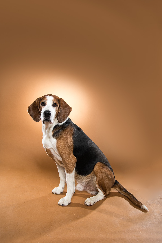hund-hundefotograf-hundefotografering-fotograf-studiohodne-hodne--4.jpg