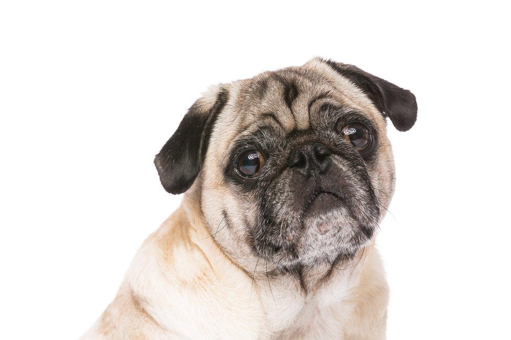 hund-hundefotograf-hundefotografering-fotograf-studiohodne-hodne--6.jpg