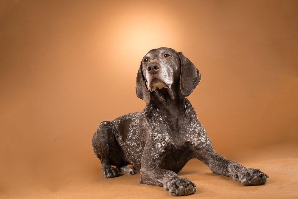 hund-hundefotograf-hundefotografering-fotograf-studiohodne-hodne--7.jpg