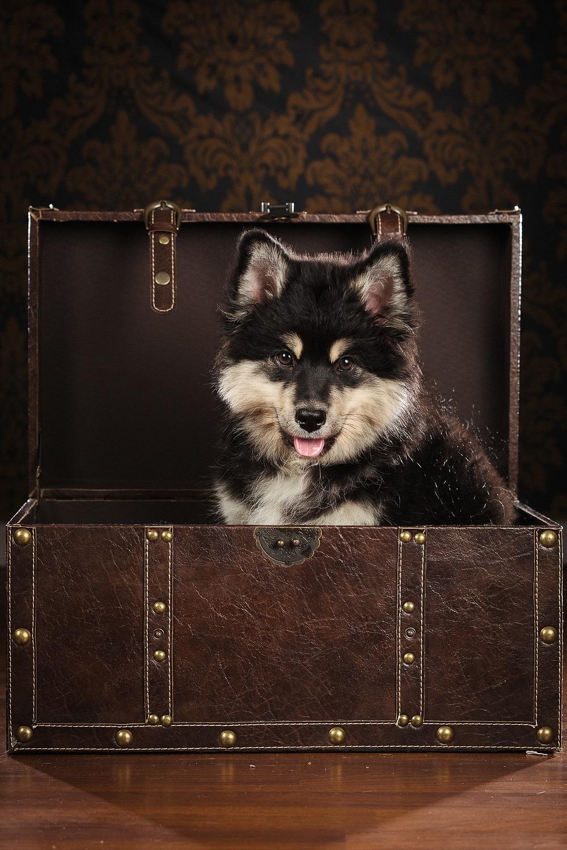 hund-hundefotograf-hundefotografering-fotograf-studiohodne-hodne--8-kopi.jpg