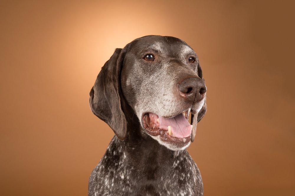 hund-hundefotograf-hundefotografering-fotograf-studiohodne-hodne--8.jpg