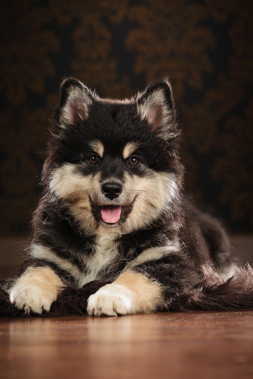 hund-hundefotograf-hundefotografering-fotograf-studiohodne-hodne--10-kopi.jpg