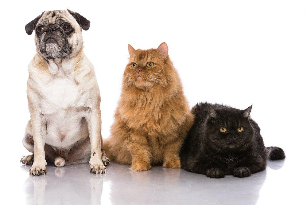 hund-hundefotograf-hundefotografering-fotograf-studiohodne-hodne--9.jpg