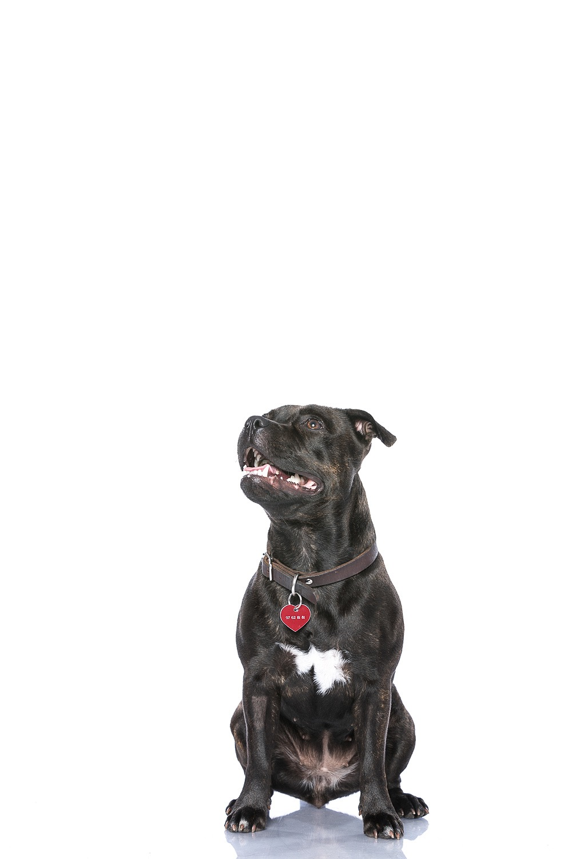 hund-hundefotograf-hundefotografering-fotograf-studiohodne-hodne--15.jpg