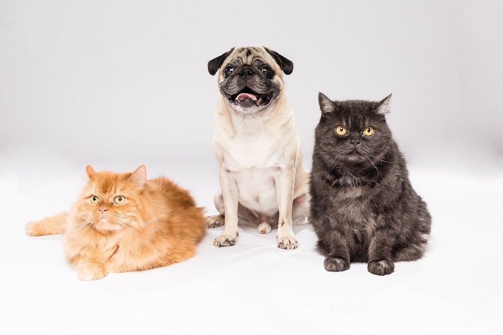 hund-hundefotograf-hundefotografering-fotograf-studiohodne-hodne--14.jpg