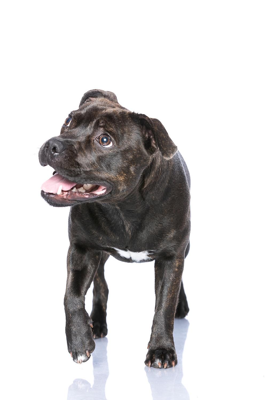 hund-hundefotograf-hundefotografering-fotograf-studiohodne-hodne--17.jpg
