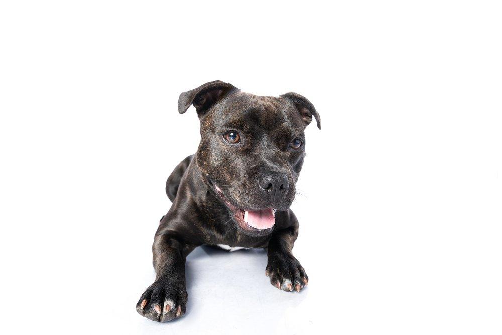 hund-hundefotograf-hundefotografering-fotograf-studiohodne-hodne--18.jpg