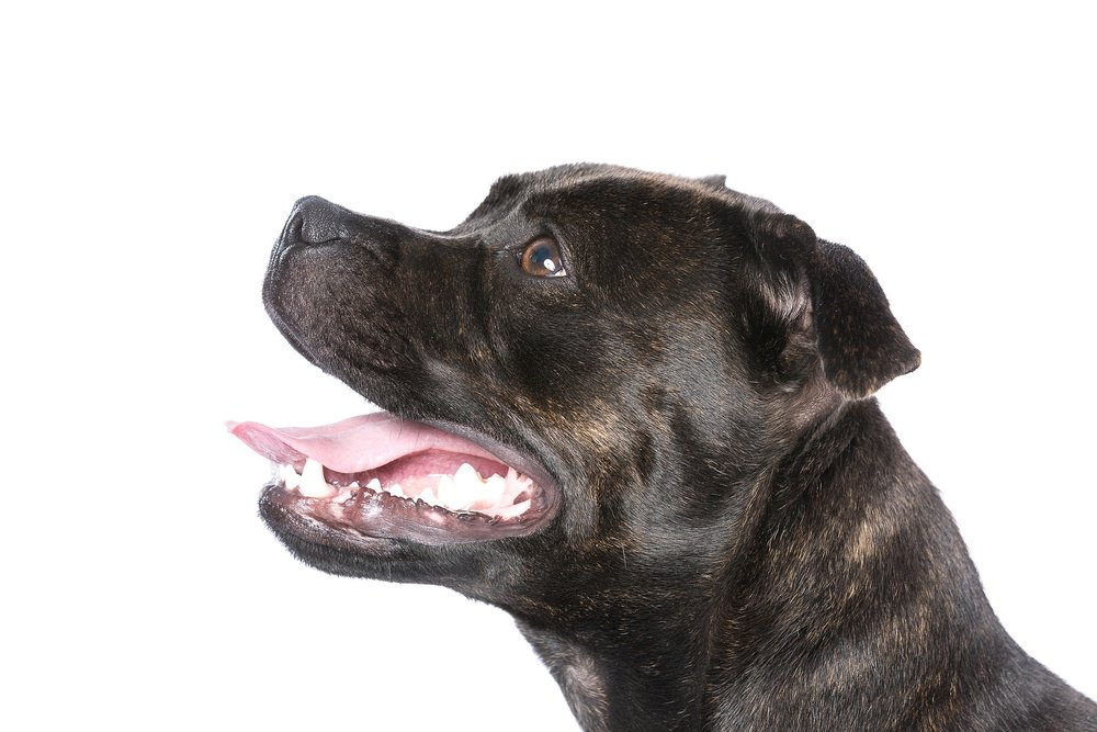 hund-hundefotograf-hundefotografering-fotograf-studiohodne-hodne--16.jpg