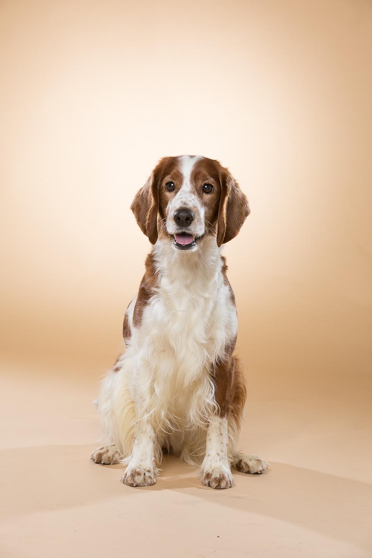 hund-hundefotograf-hundefotografering-fotograf-studiohodne-hodne--20.jpg