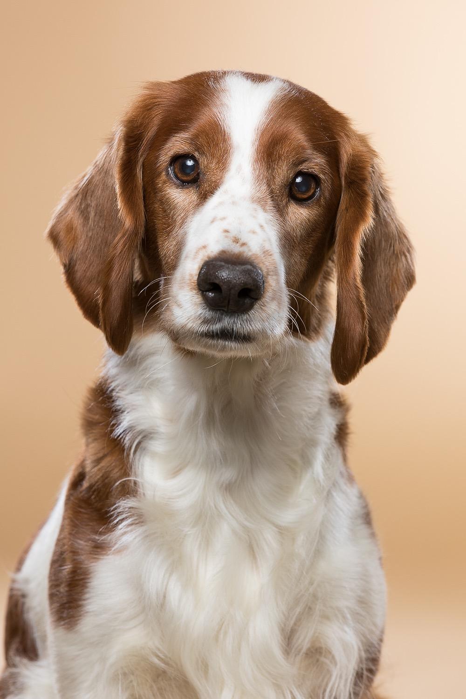 hund-hundefotograf-hundefotografering-fotograf-studiohodne-hodne--19.jpg