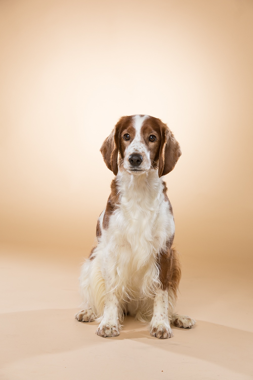 hund-hundefotograf-hundefotografering-fotograf-studiohodne-hodne--21.jpg