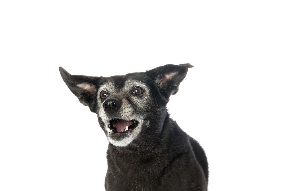 hund-hundefotograf-hundefotografering-fotograf-studiohodne-hodne--23.jpg