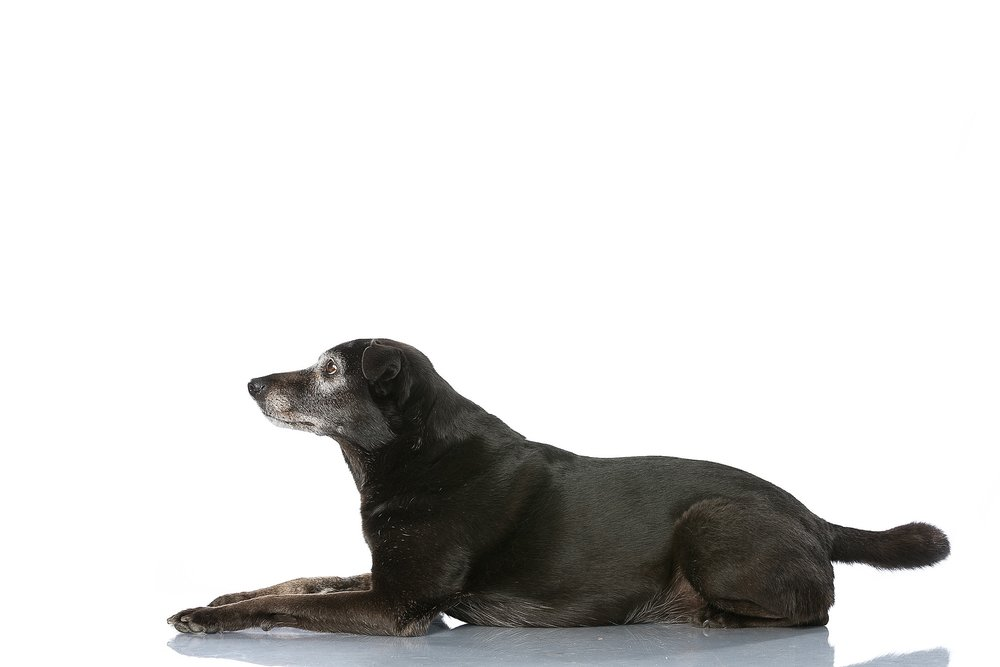 hund-hundefotograf-hundefotografering-fotograf-studiohodne-hodne--26.jpg