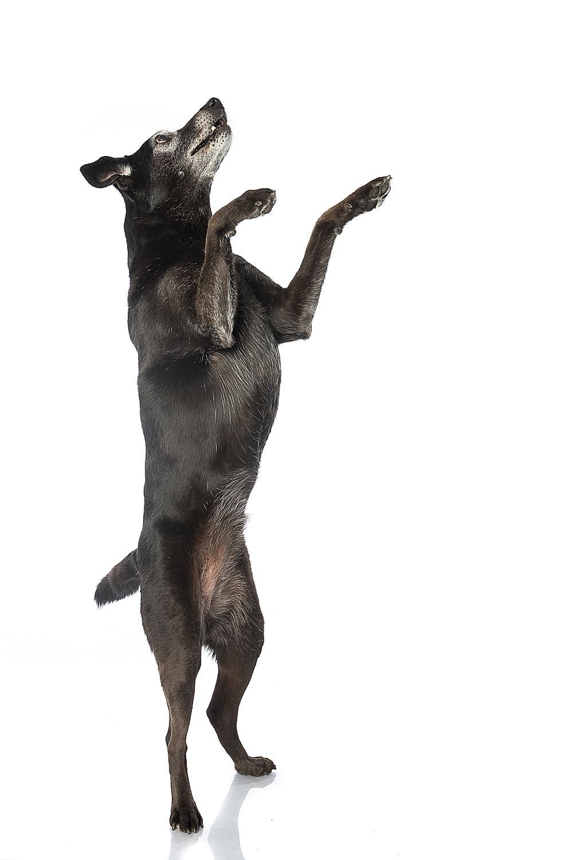 hund-hundefotograf-hundefotografering-fotograf-studiohodne-hodne--27.jpg