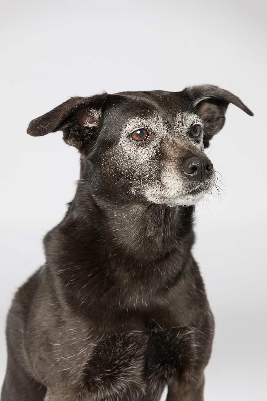 hund-hundefotograf-hundefotografering-fotograf-studiohodne-hodne-2.jpg