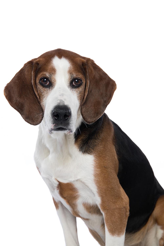 hund-hundefotograf-hundefotografering-fotograf-studiohodne-hodne-5796.jpg