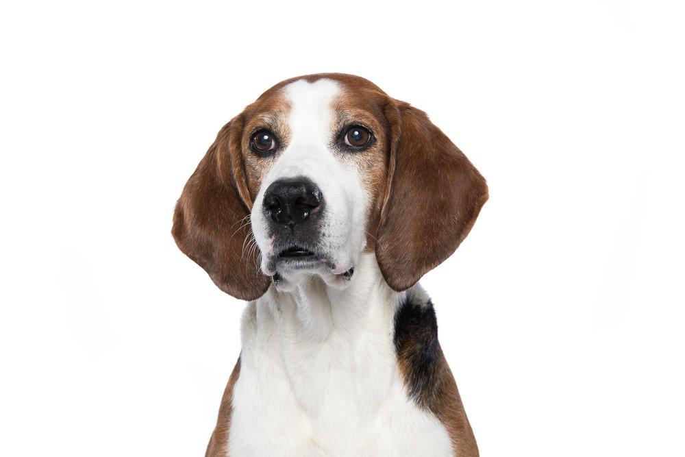 hund-hundefotograf-hundefotografering-fotograf-studiohodne-hodne-5724.jpg